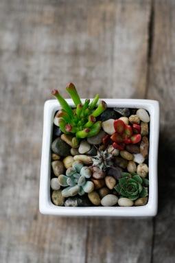 Succulent square