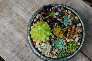Succulent bowl