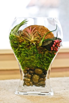 See-through terrarium