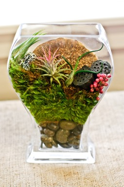 Ultra-groovy terrarium